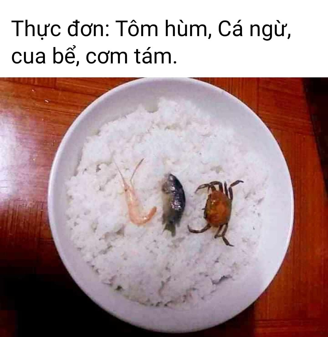 tom-hum-ca-ngu-cua-be-com-tam